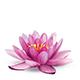 Wyciąg z lilii wodnej i lipoaminokwas